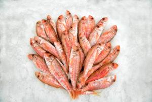 salmonetes encima de hielo